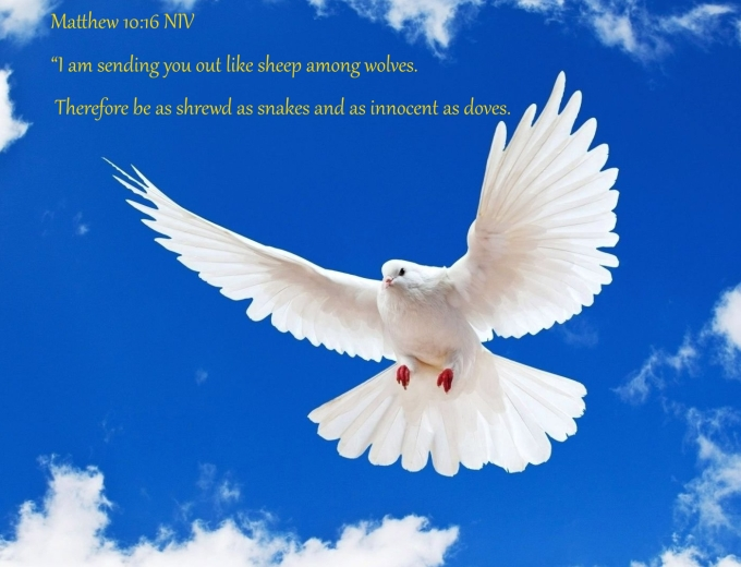 Matthew 10 16 06-29-2020